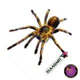 Elkadart 100 Micron Flight Standard - Spider
